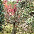 不退寺の庭園1