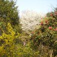 不退寺の庭園2