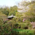 不退寺の庭園4