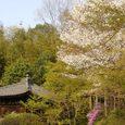 不退寺の庭園5