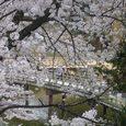 浮見堂の桜11