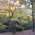 春日大社から若草山へ向かう途中の茶屋3