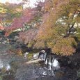 東大寺の南大門前の水辺で水を飲む鹿