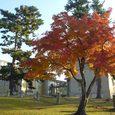 奈良国立博物館前の見事な紅葉