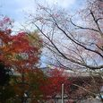 東大寺の東側と紅葉2