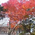 東大寺の東側と紅葉5