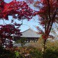 東大寺の東側と紅葉4