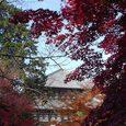 東大寺の東側と紅葉3