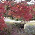 二月堂から東大寺に抜ける道3