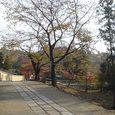 二月堂から東大寺に抜ける道6