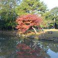 浮見堂近くの池にある紅葉