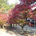 若草山ふもとの神社1